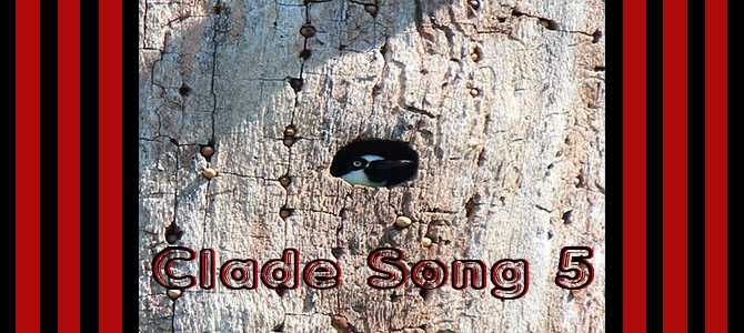 Clade Song 5 Banner